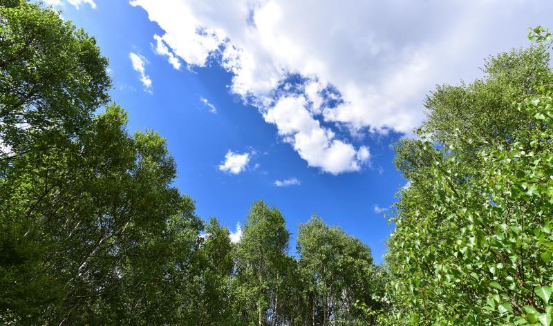【最美翠云山原始森林】森林于星空帐篷狂欢夜 八月主题周,周周换花样
